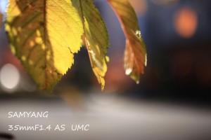 IMG_4915のコピー