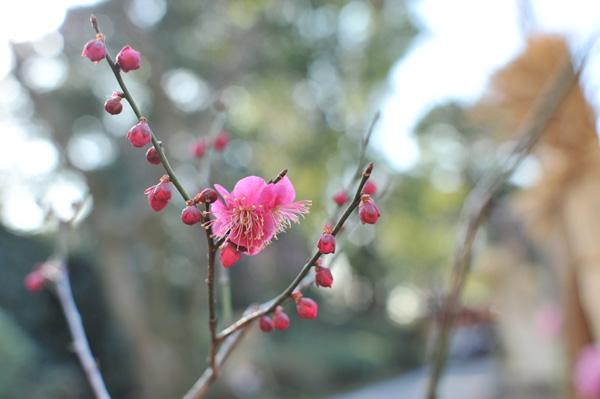 上野公園散歩写真(7)