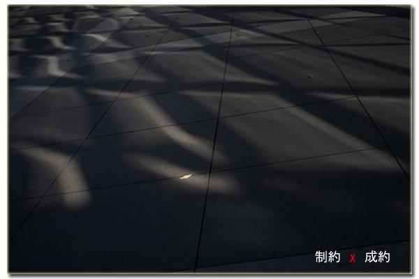 オリンパス ZUIKO AUTO-S 50mm F1.8(0)
