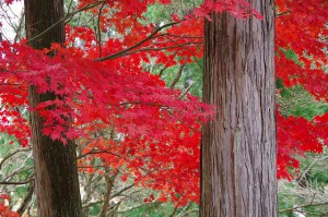 紅色がまぶしい!
