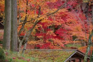 紅葉が引き立ちます!
