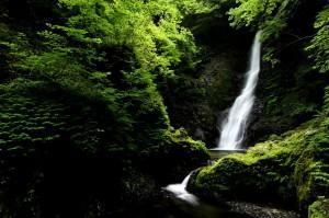 野鹿の滝③