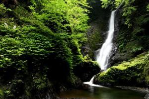 野鹿の滝⑤
