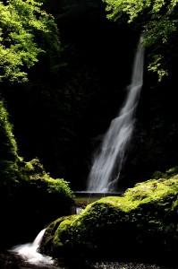 野鹿の滝①