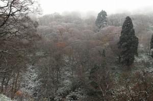 氷ノ山 冠雪①