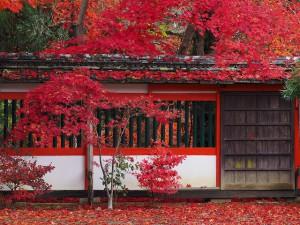 M40-150鍬山神社①