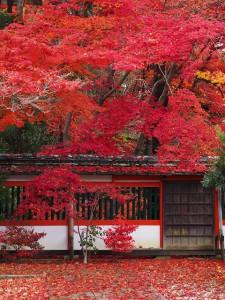 M40-150鍬山神社②