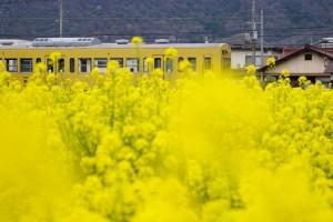 α77Ⅱ 近江鉄道①