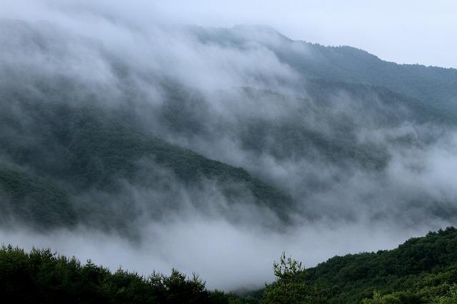 雨のならではの霧