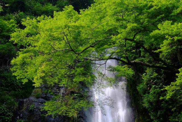 箕面の滝②
