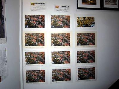 階段ギャラリー桜