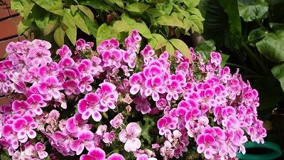 沢之町1 花