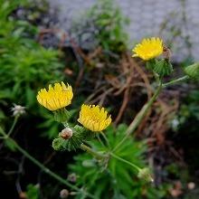 小さな花2