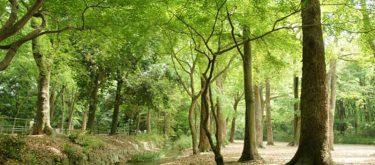 下鴨神社・ 糺の森