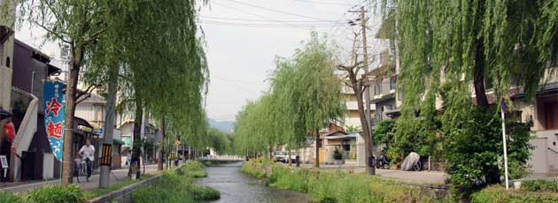 白川・柳並木