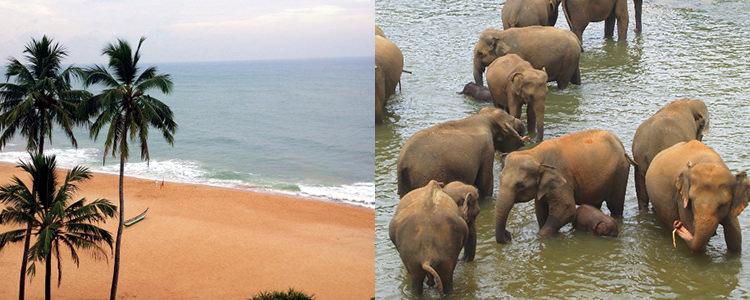 撮影ツアー写真 スリランカ
