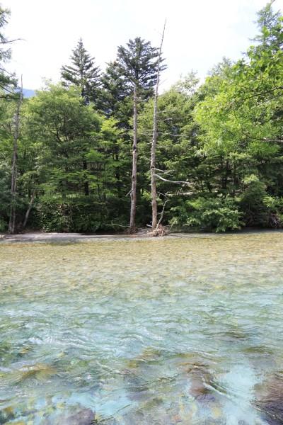 【撮影地情報】 梓川の清流は今も変わらず綺麗だった。「信州上高地」3