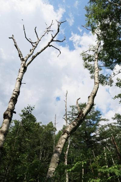 【撮影地情報】 梓川の清流は今も変わらず綺麗だった。「信州上高地」5