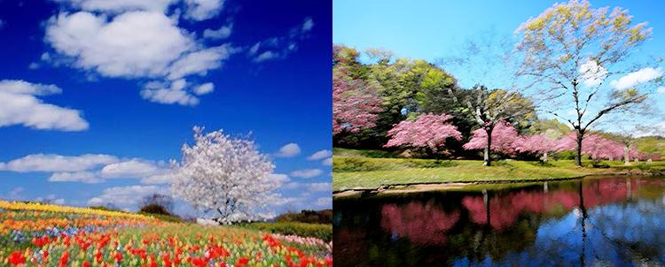 川村先生 花風景